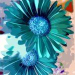 blue gerbera daisies photoshop